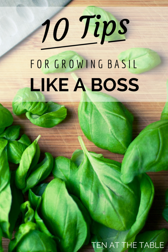 10 Tips For Growing Basil Like A Boss| Ten at the Table| http://tenatthetable.com