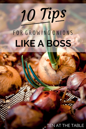 10 Tips For Growing Onions Like A Boss |Ten at the Table |http://tenatthetable.com